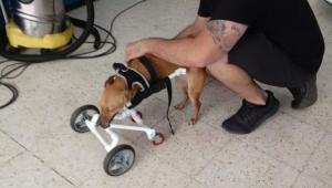 La silla de ruedas para Ikdara